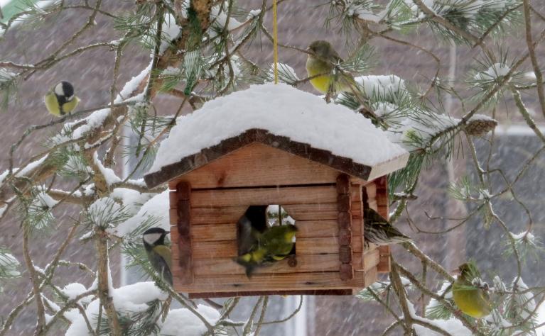 """Pie barotavas atkal jauns putniņu """"pieplūdums""""."""