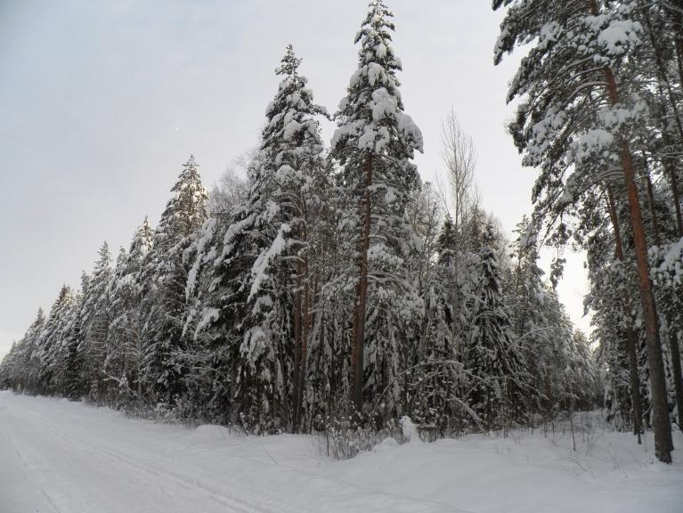 Autors: Pierobežā. Sniega skulptūras mežā 22.12.2012., Žīguri