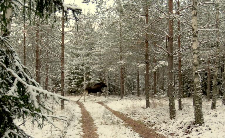 Mežā vēl sniega pamaz.