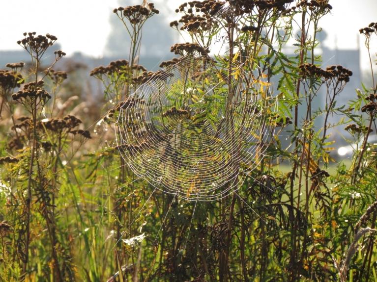 Par vasaras noslēguma tuvošanos liecināja zirnekļu tīklu atspīdumi rīta rasā, ...