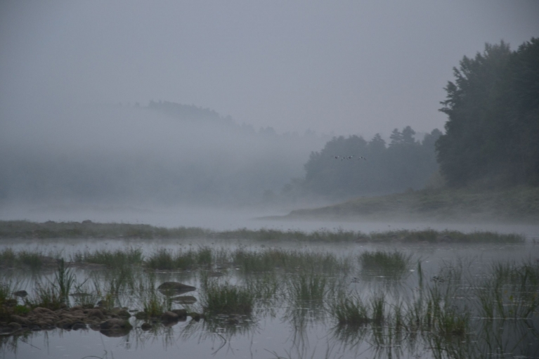 Rīts pie mazūdenīgās Daugavas ataust ar miglu un putniem.