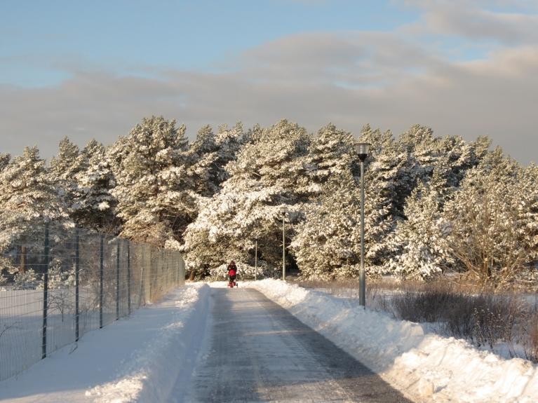 Īsta ziemas noskaņa jūtama, tuvojoties mežam
