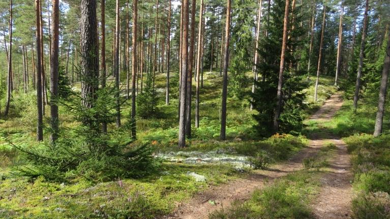 Arī pa mežu pašlaik staigāt ir viena bauda - zeme vēl gana mitra, lai augtu sēnes.
