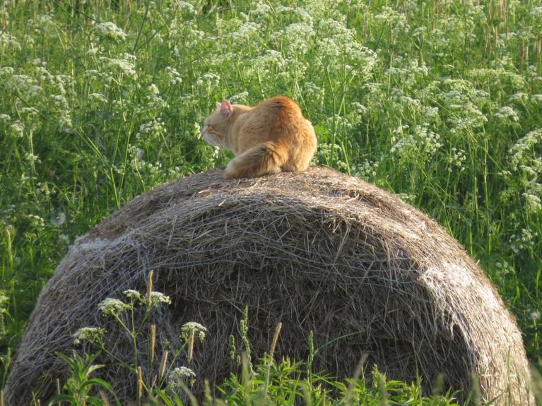 """Kaimiņu runci puķes neinteresē - tas """"zicē"""" uz pelēm"""