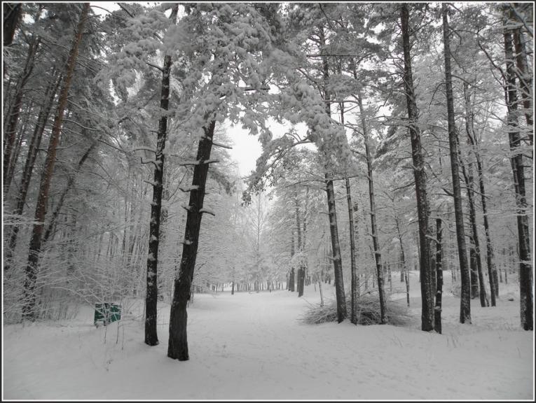 Autors: gubumākonis. Rīgā ziema atnāk atpakaļ, 10.01.2013.