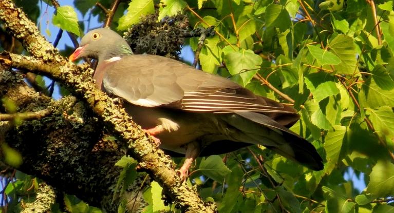 Foto: Migla. Putni vēl sildās saules staros (1.07.)