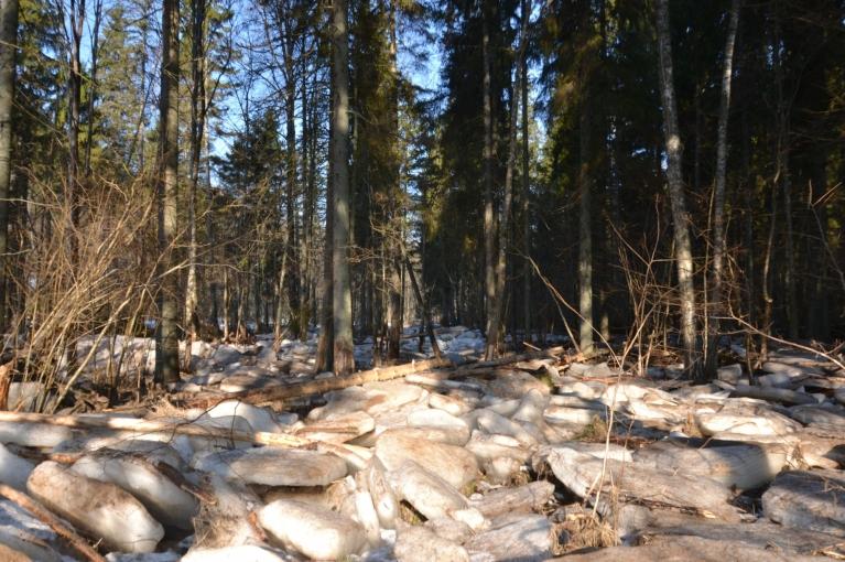 Augšpus Kārļu HES sastopam Amatas janvāra palu darbu - mežu pie pašas upes, pilnu ar palu atnestajiem ledus gabaliem.