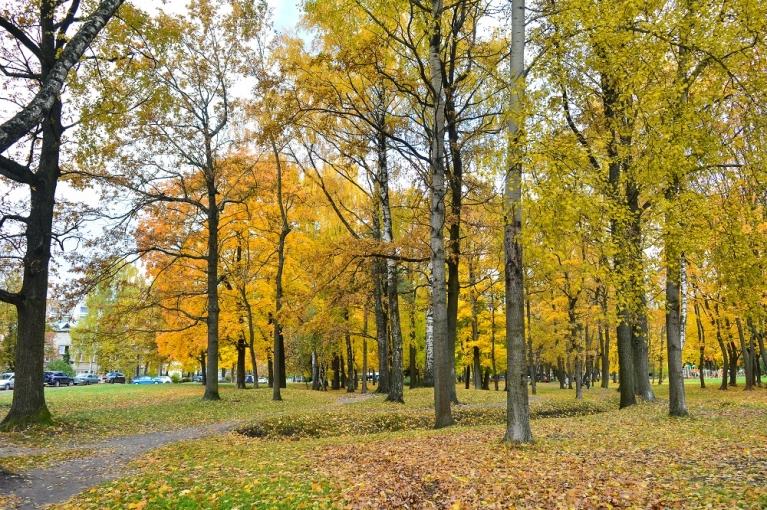 Krāsainie koki