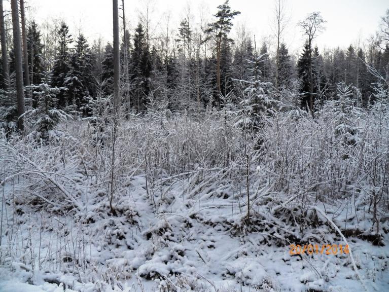 Meža malā izskatās gandrīz vai pēc kupenām, diemžēl - tikai izskatās.