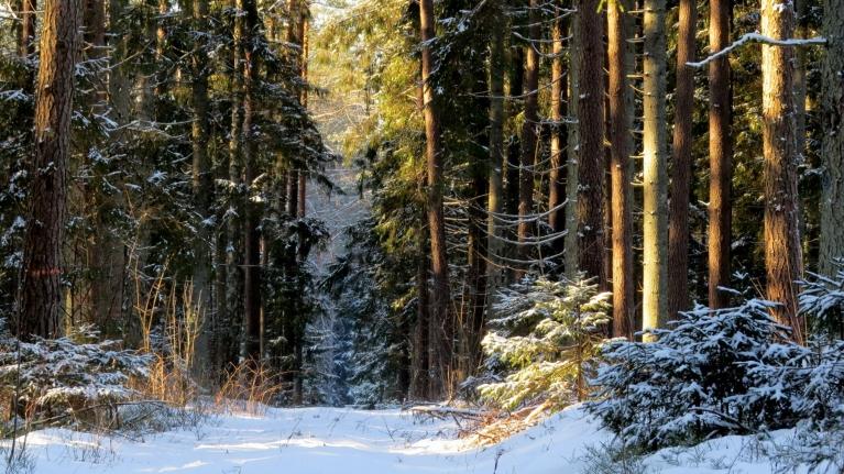 Man kā dzinējam tiek laba vieta- meža stigas sākums.