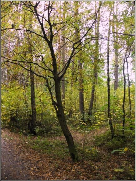 Imantas mežā