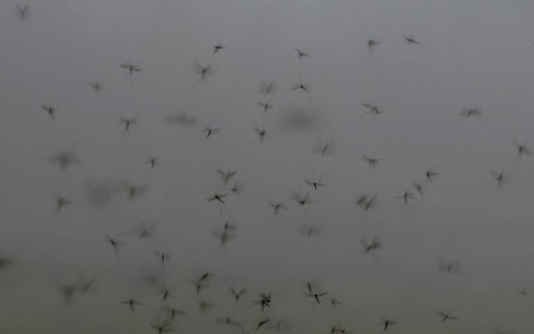 Šodien redzu  uzkrītoši daudz  sijājošos odu barus, var jau būt ka tāpēc, ka ir pilnīgs bezvējš.