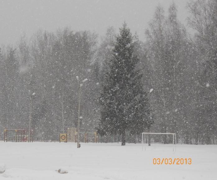 Snigšana 3. martā.  Žīguri.