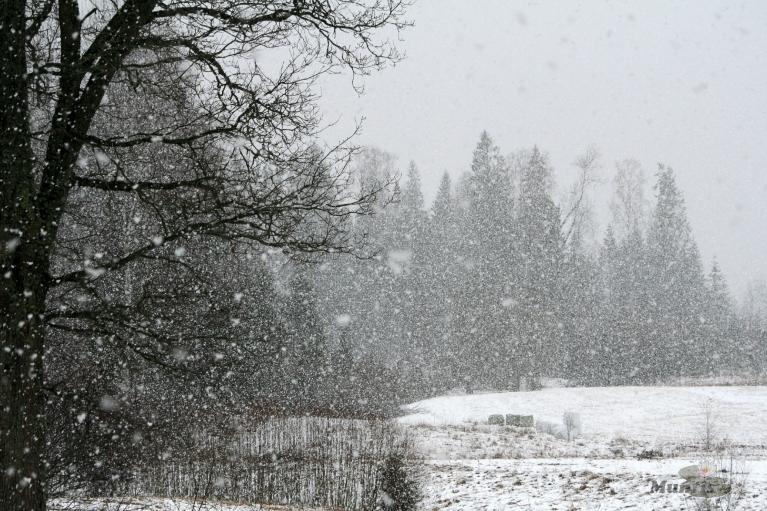 Autors: muntis, Vecpiebalga. Pēcpusdienā sāka atkal snigt un temp. nokritās līdz 0. (15.03.)