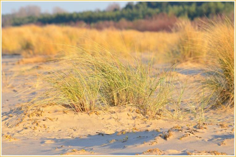 18. novembris 2014. gadā - skaista saulaina diena Mangaļsalas pludmalē