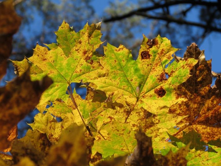 Nāk rudens apgleznot Latviju... skaisti