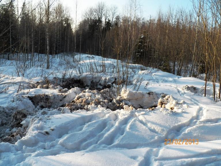 Mežacūku februāris (Žīguru apkārtnes meži)