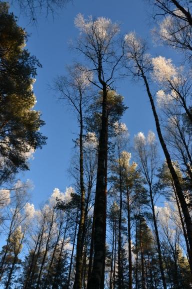 Tikai purvā bijusi tik liela sarma, jo no tā atvadoties, mežā sarma redzama tikai koku galotnēs...