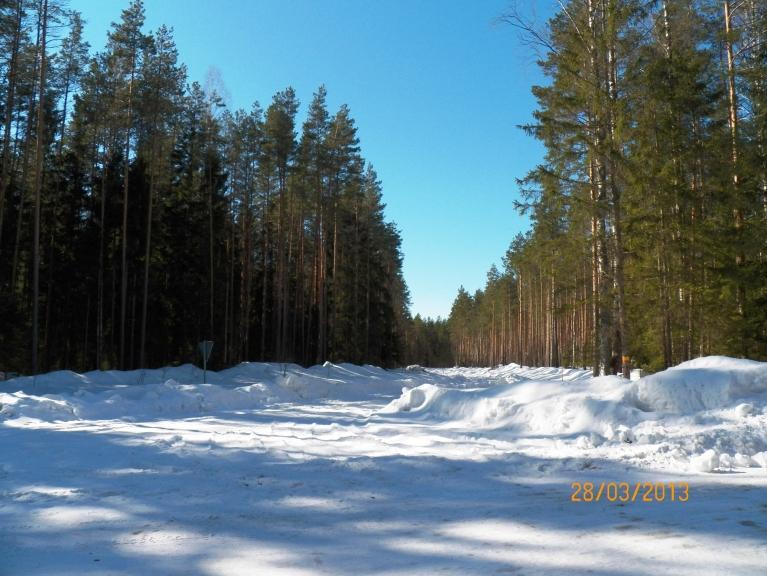 Meža ceļi 28. martā (Žīguru apkārtne)