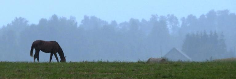 Mierīgs lietus 5 stundās veldzēja zemi (20 mm).