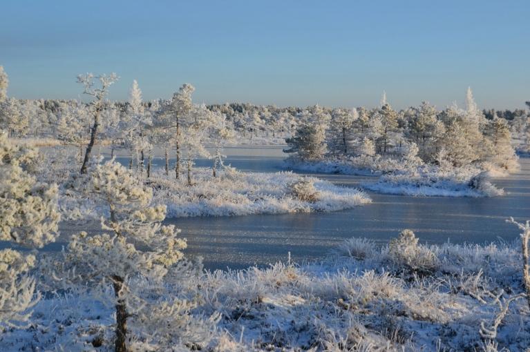 saule ļauj izbaudīt ziemas skaistumu pilnībā.