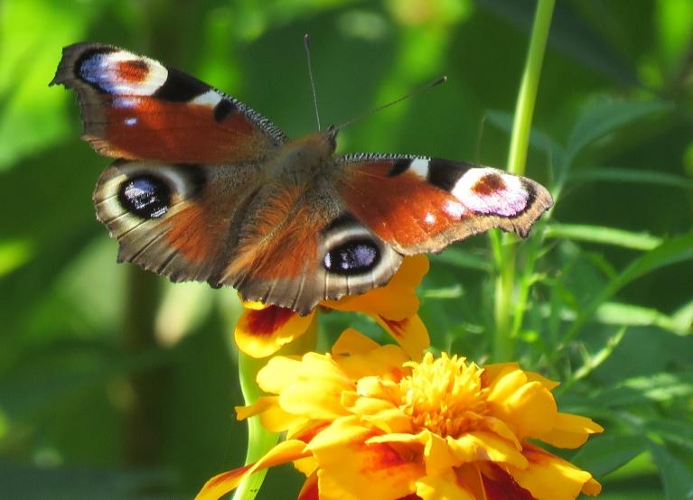 Dienas vidū dārzs mudž no visādas dzīvības.