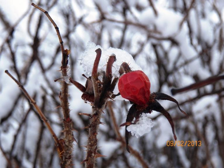 Sniegotais februāris (Žīguri)