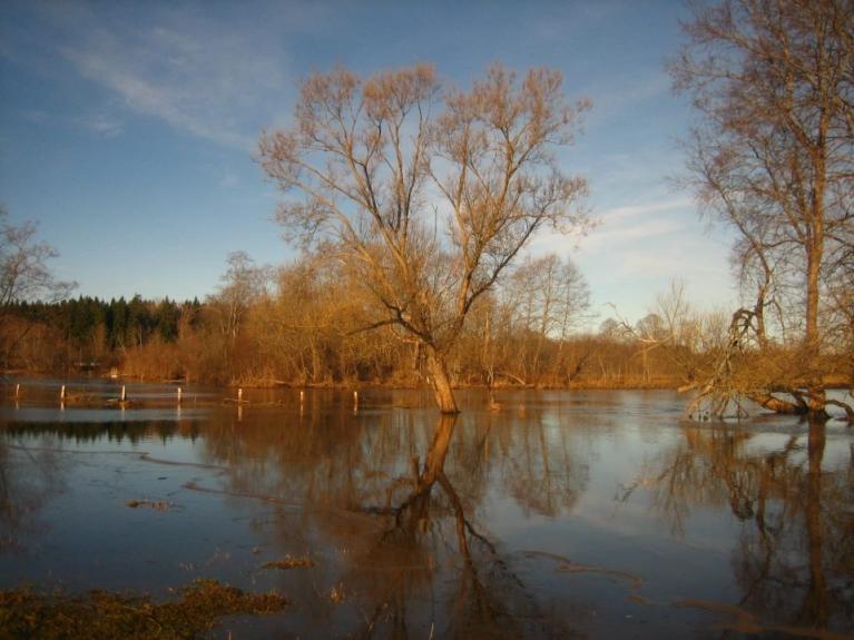 Autors: Lauma. Pali Lielajā Juglā. Upe ir aiz žoga, šai pusē ir ganības :)