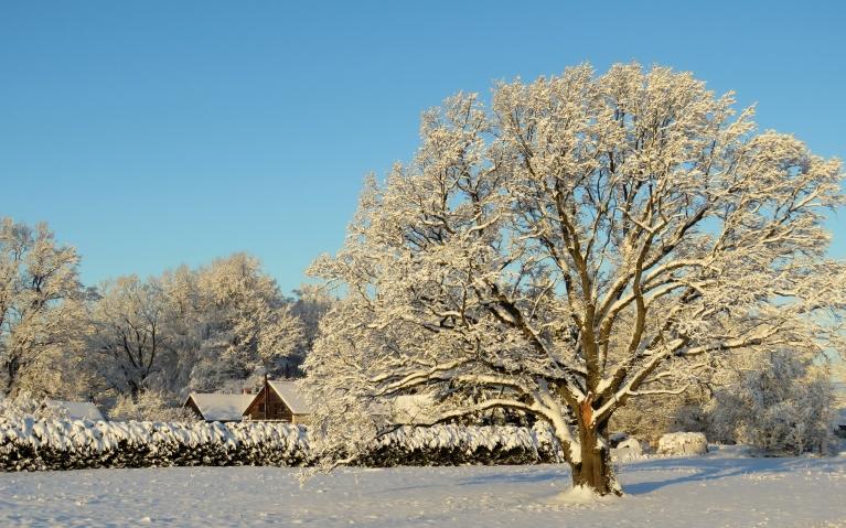 3. decembra rīta puse -Saule, neliels saliņš un zilas debesis.