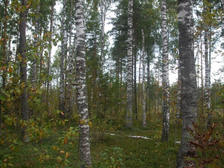 Mežs - reti sanāk būt...