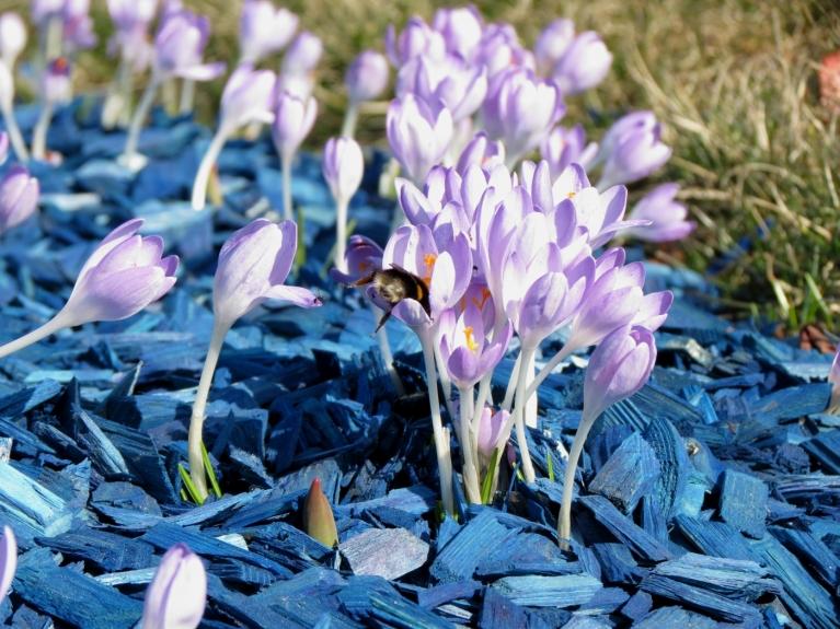Līdz ar košajām puķu dobēm, aktīvu rosību uzsāka arī kukaiņi