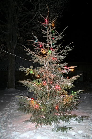 22.12.2009. Apmācies, neliels sniegs, mēr. DA, -7;-12.