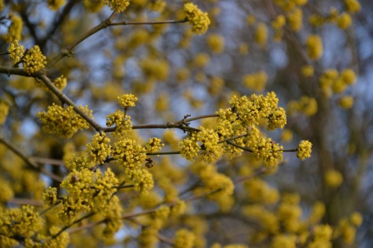 Netālu uzziedējis arī krūms ar dzelteniem ziediņiem.