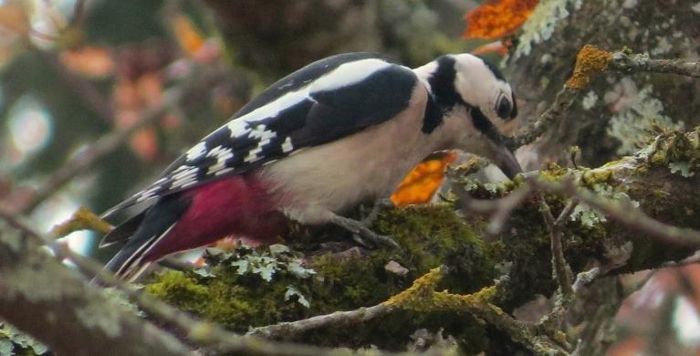 Sarosījušies putni- jāsteidz uzkrāt tauku rezervītes.