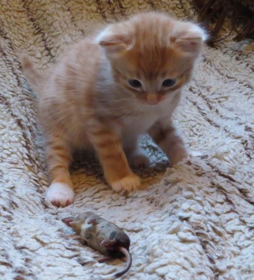 Septembris - mācību laiks, arī maziem kaķīšiem :).