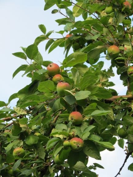 ... rudens toņos krāsotiem āboliem,....