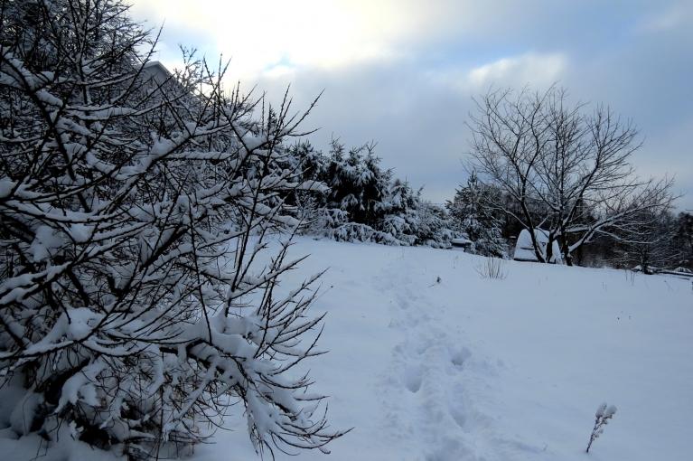 Rīts pārsteidza ar 19 cm biezu sniega kārtu.