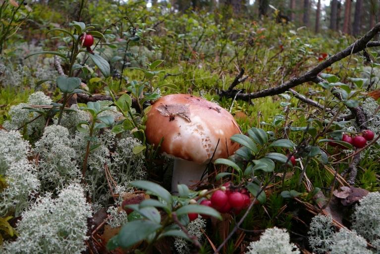 Mežā - pa kādam poķītim...