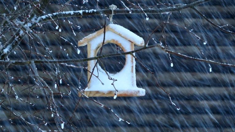 8. februāra rītā no mākoņiem lejup gāzās kaut kas vidējs starp sniegu un palieliem krusas graudiem.