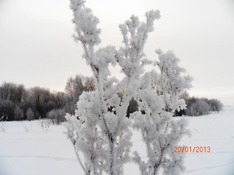 Autors: Pierobežā. Viļaka, 20.01. Vīgrieze ziemā...