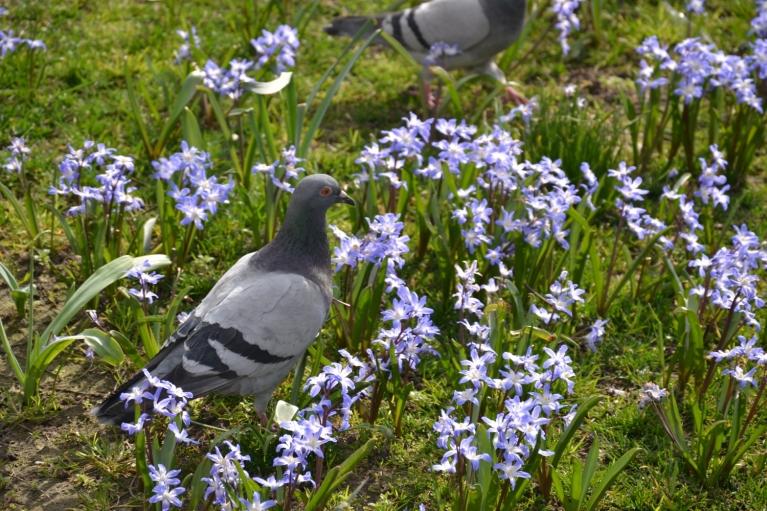22. marts. Briselē uz brīdi uzspīd saule, liekot baložiem iemirdzēties starp zilajiem cerību ziediņiem kādā skvērā, kas tā vien aicina atbraukt atkal...