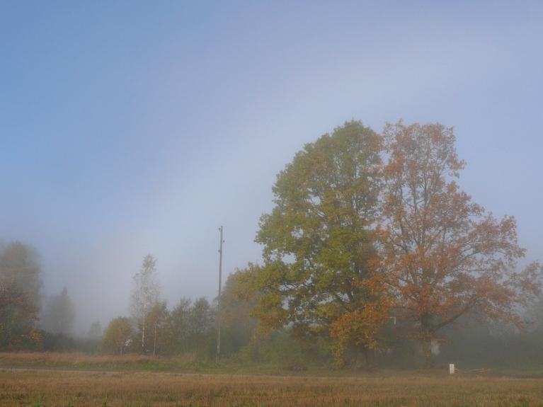 12.oktobris Siguldas apkārtnē. Rīts iesākās ar miglu (neizteikts miglas varavīksnes loks)