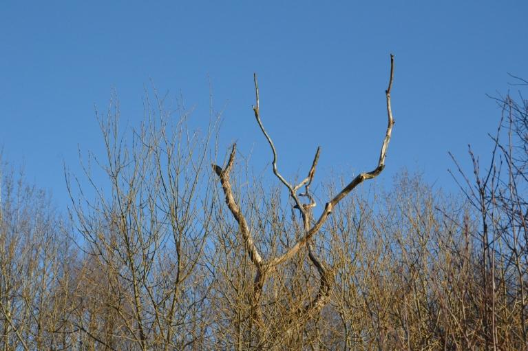 Koku zari jau, piemēram, šķiet daudz košāki nekā pirms dažām nedēļām...