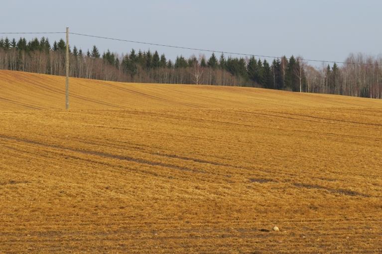 Šī nav pērnā siena pļava bet ziemāji pēc kailsala :(