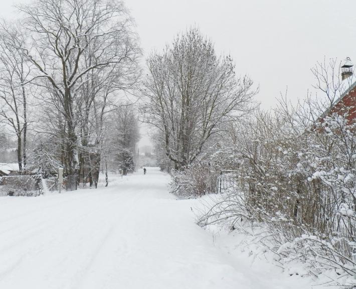 Jau 25 decembra rīts ar saviem 7 cm; kopīgais sniega segas biezums ~11 cm.