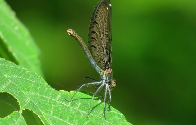 Tuvējā birztaliņā daudz dažādu nokrāsu spāres.