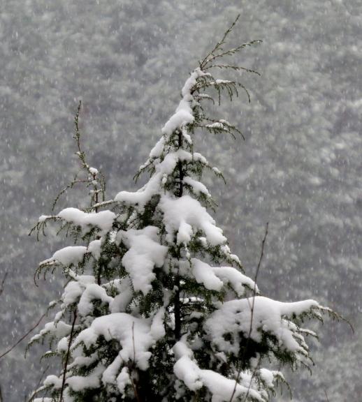 Snigšana turpinājās visu dienu.