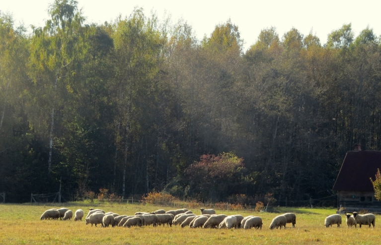 Aitas turpina ganīties rudens attālā.