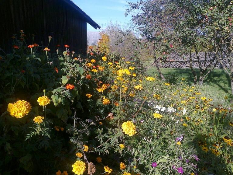 Autors: Emilis. Tipiskas rudens ainiņas no Rankas puses 1. un 2. oktobrī. Salnas vēl nav bijušas un viss vēl vienos ziedos...