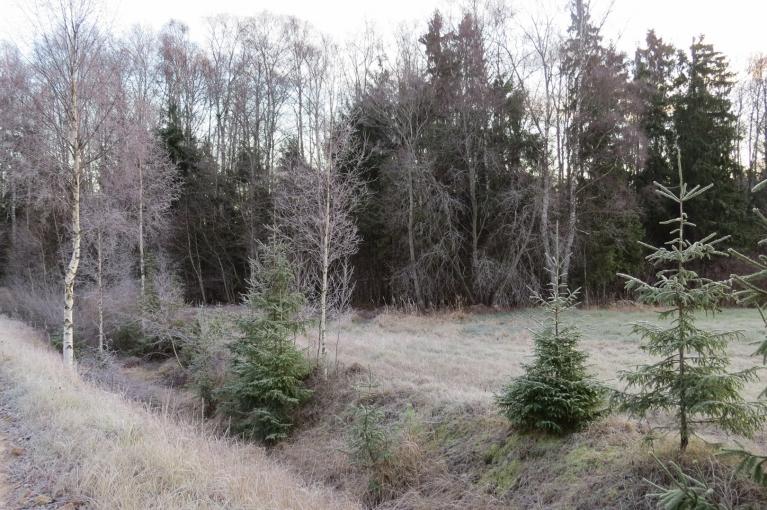 Balta arī mežmala.
